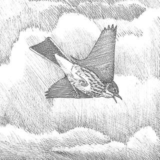 dessin de pipit farlouse en vol